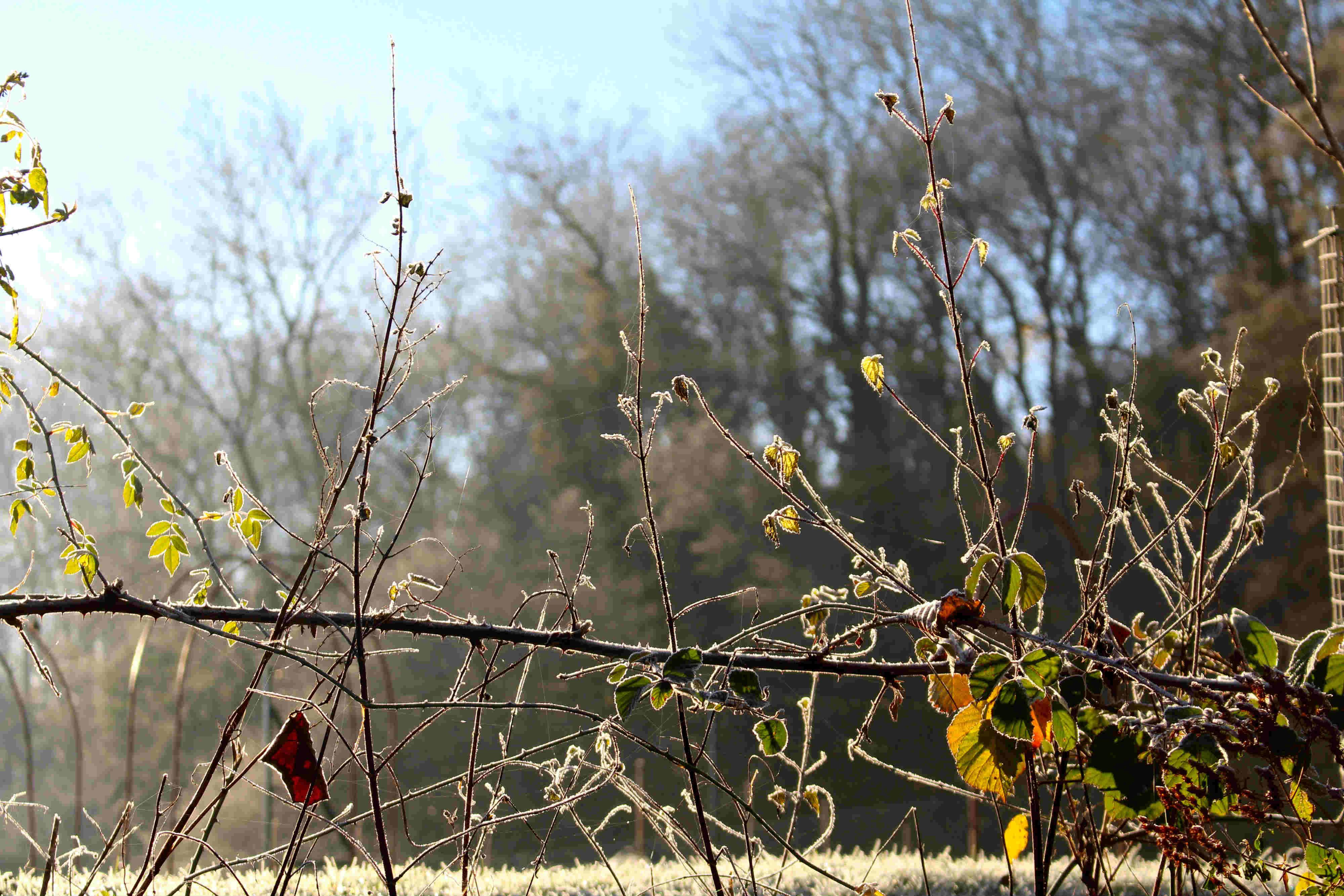 frosty-meadow