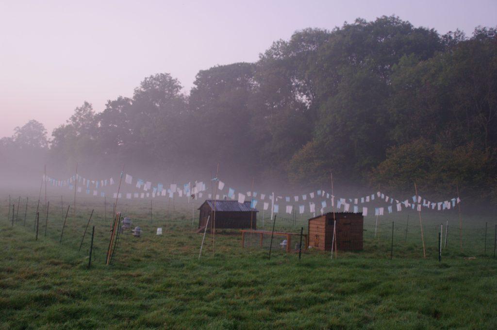 hen-compound-mist